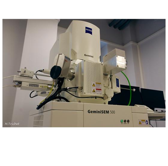 Cryo-SEM - Zeiss GeminiSEM500